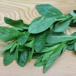 foraged-herb-small