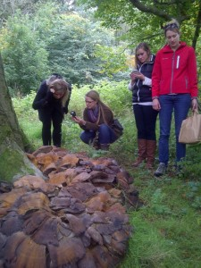 Giant Polypore & Foragers