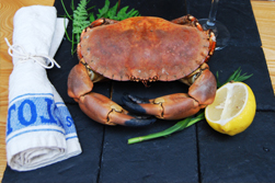 crab-small